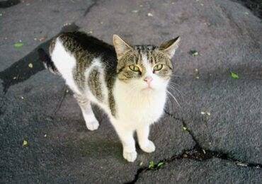 Dette skal du gøre, hvis du finder en efterladt eller forsvundet kat