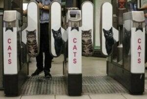 Metroen i London udskifter reklamer med billeder af katte