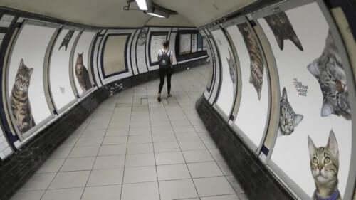 Billeder af katte på væggene i Londons metro.