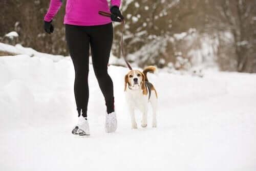 Lassie effekten: Din hund kan hjælpe dig med at holde dig i form