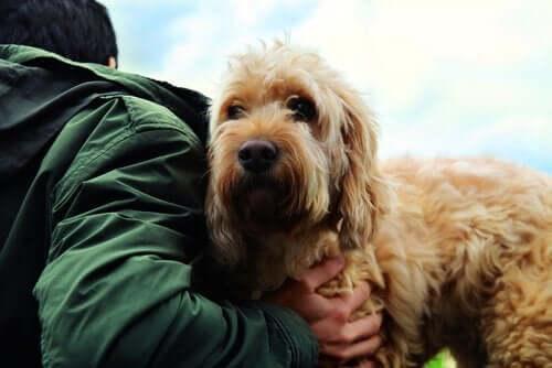 Hemmeligheder om venskabet mellem mennesker og hunde