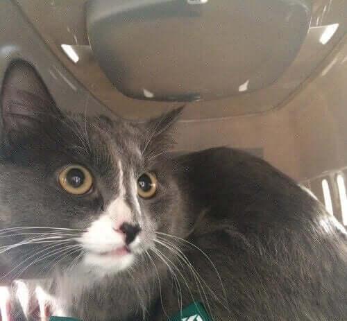 Mød den russiske kat med en månedsløn på 3000 kroner