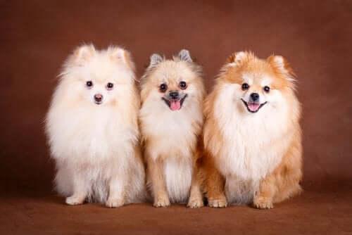 Tre hunde ved siden af hinanden