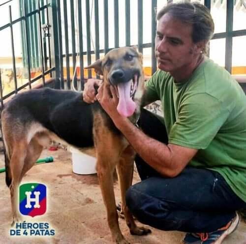 Servicehunde har tjent mennesker og samfundet det meste af deres liv, og fortjener en værdig pension