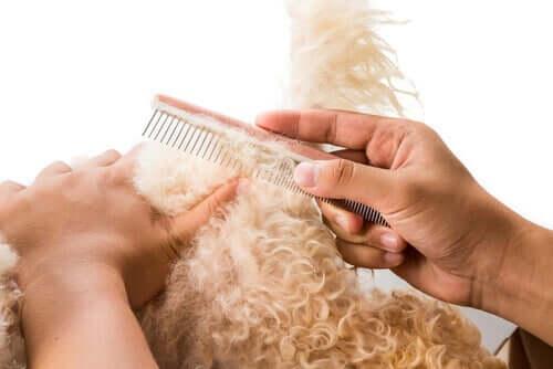 Børstning af en hunds pels