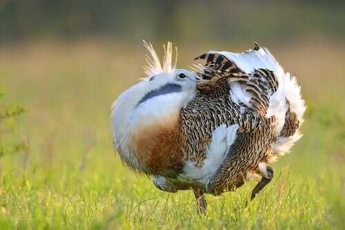 Fugl på græs