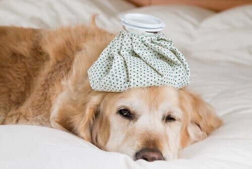 Kan influenzavirussen ramme dyr?