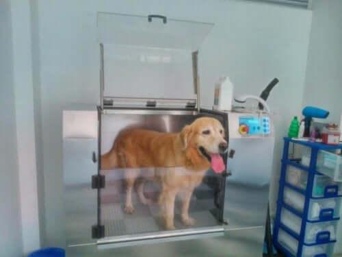 Hvordan fungerer hundevaskemaskiner?