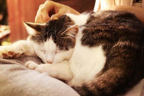 De 3 bedste måder at ae katte på