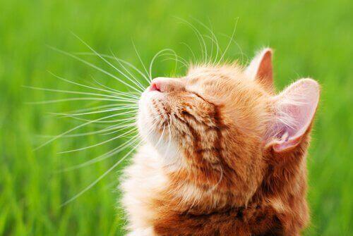 Det bedste hjemmelavede middel til at holde katte væk