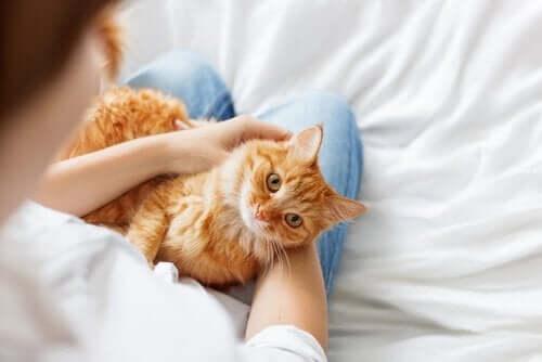 3 tips til at gøre din kat mere social