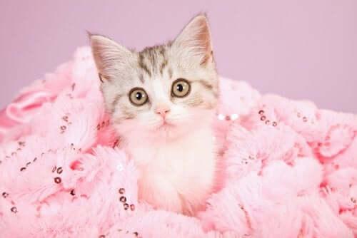 Killing ligger i lyserødt tæppe