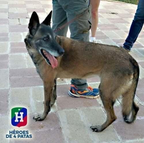 Foreningen, Firebenede helte, finder nye hjem til pensionerede servicehunde