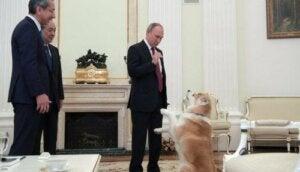 Vladimir Putins hund skræmmer japanske journalister