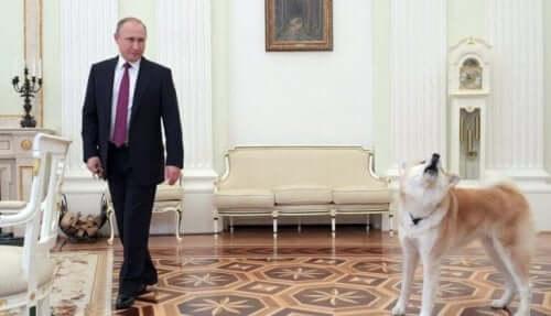Den russiske præsident, Vladimir Putin, er meget glad for sin japanske hund