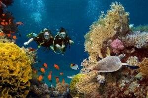 Personer dykker mellem koralrev
