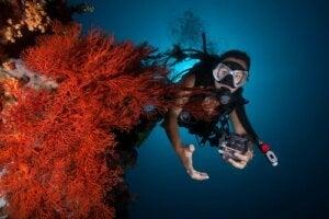 Dykker i koralrev studerer forholdet mellem koralrev og mikroskopiske alger