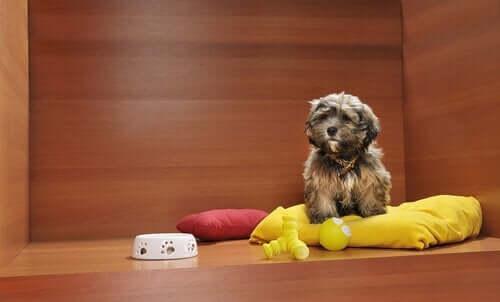 Hund på pude - Er hund eller chimpanse klogest?