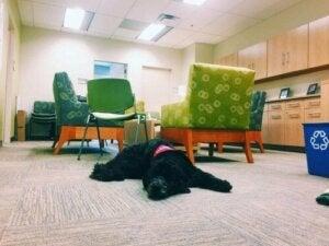 Hundeprofessoren på University of Southern California