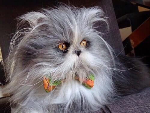 Kat eller hund? Mød stjernen på de sociale medier, Atchoum