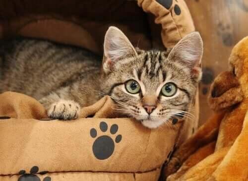 Sådan kan man træne en kat til at sove i sin egen seng