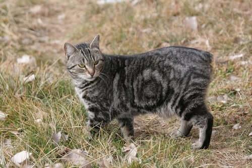 En kat på mark