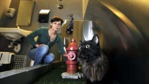 Flere og flere mennesker rejser med deres kæledyr, og derfor besluttede man i JFK lufthavn at lave et lufthavnstoilet til kæledyr
