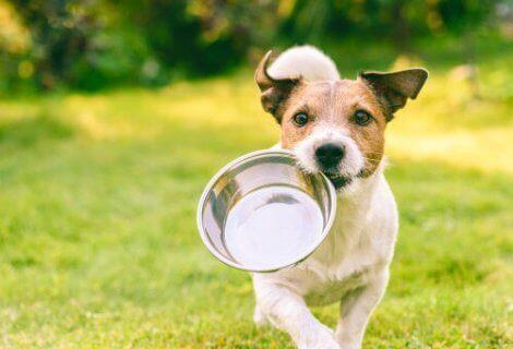 Hund med tom foderskål, som kan være årsag til, at hunde slikker på væggen