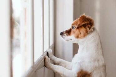 Grunde til, at hunde slikker på væggen