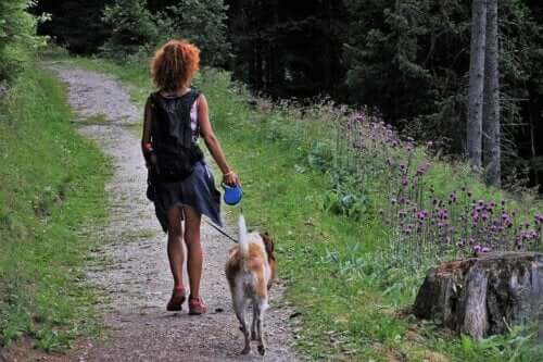 5 tips til at campere med en hund