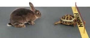 Skildpadden og haren løber om kap