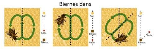 Illustration af biernes dans
