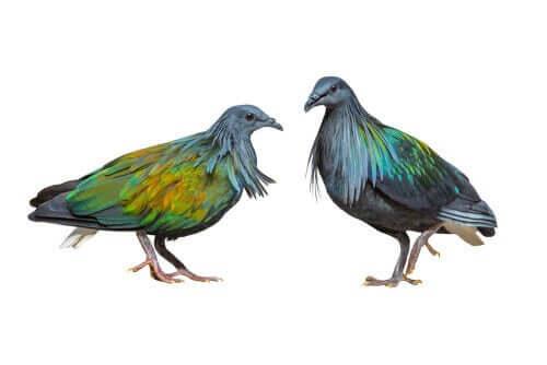 Tegning af to fugle