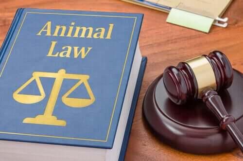 Advokat til dyr: Hvorfor har de brug for det?