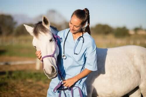 Pleje og behandling af heste med skab