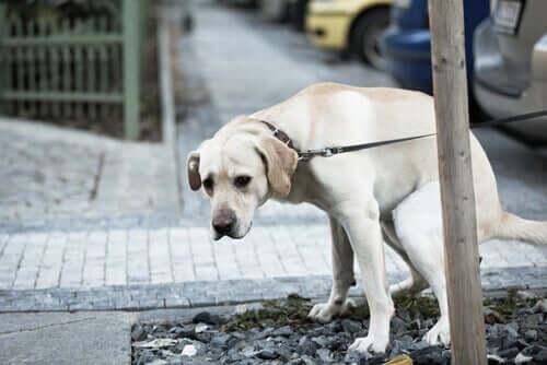 Fordøjelsesproblemer hos hunde: Behandling og forebyggelse