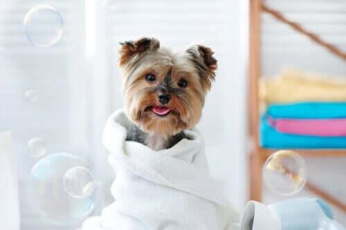 Sådan kan man bade kæledyr med vådservietter