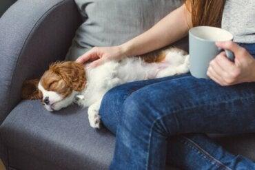 Grunde til, at et kæledyr kan blive bevidstløs