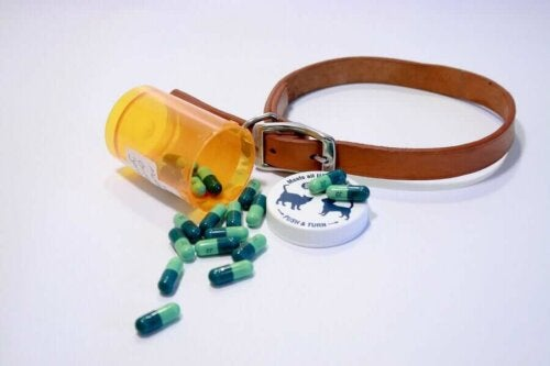 Det sker, at hunde tager medicin til mennesker, selvom det frarådes kraftigt