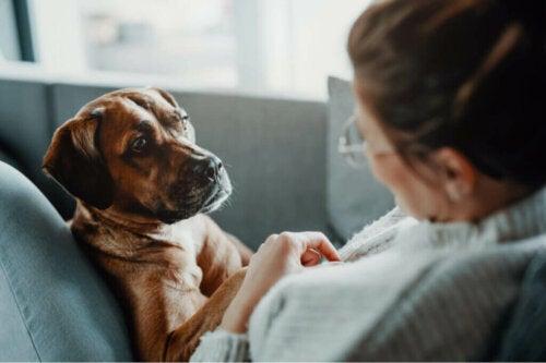 Sygdomme, som kan forårsage problemer med vejrtrækningen hos hunde