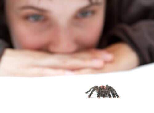 Person ser på edderkop, selvom nogle har en frygt for edderkopper