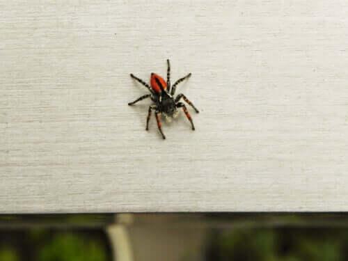 Sådan kan man overvinde en frygt for edderkopper