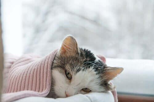 Syg kat under tæppe