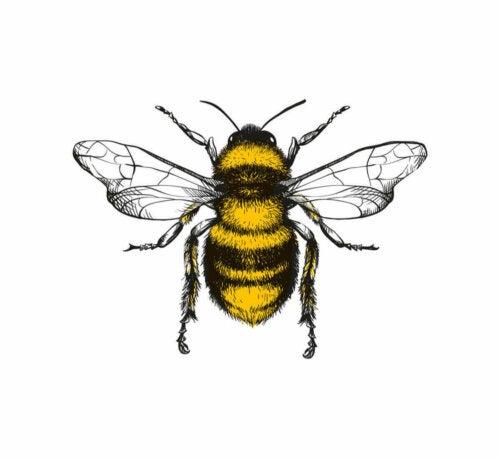 Tegning af bi