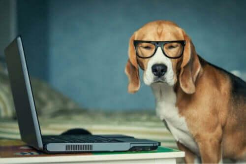 Hund med briller på og computer med sociale netværk