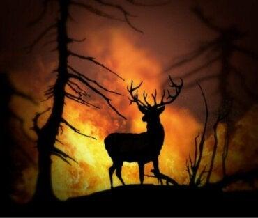 Reddede dyr - fanget i skovbrande