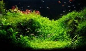 Alger i akvarie