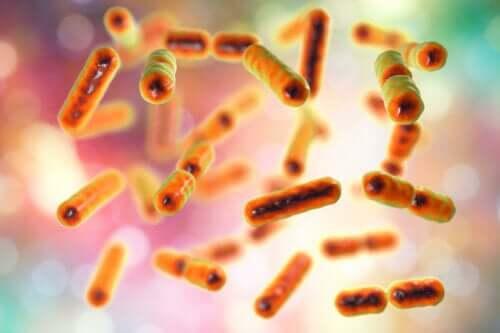 Illustration af bakterier