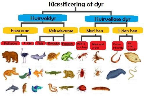 Klassificering af forskellige dyrearter