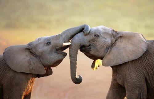 Har dyr følelser? Få svaret her